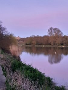 Thames at Twickenham
